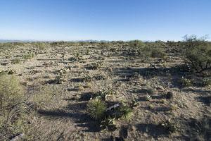 Tucson AZ LandFACING_EAST_-_NE_-_ELEVATED4
