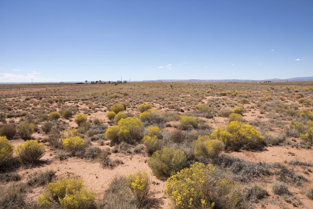 desert bushes